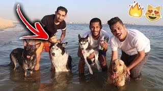 Went Swimming With My Dogs!! Didn't Expect This To Happen!💔