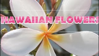 Hawaiian Flowers/Most Commonly seen