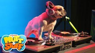 Mutt & Stuff - Hip Hop Dogs
