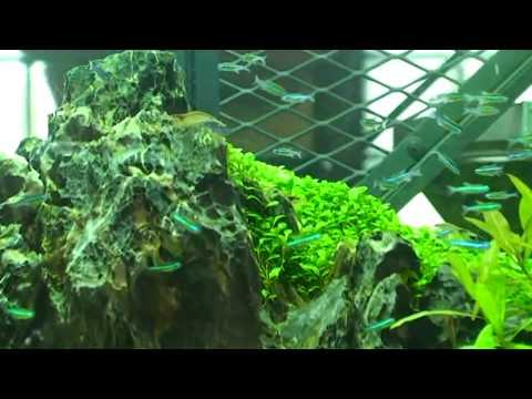 Nature Aquarium Gallery Trip 2010