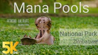 5K African Wildlife Documentary Film - Mana Pools National Park, Zimbabwe, Africa - 1 HR
