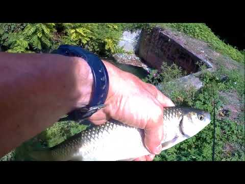 In totale su una pesca di mangiatore di video Fadeyev