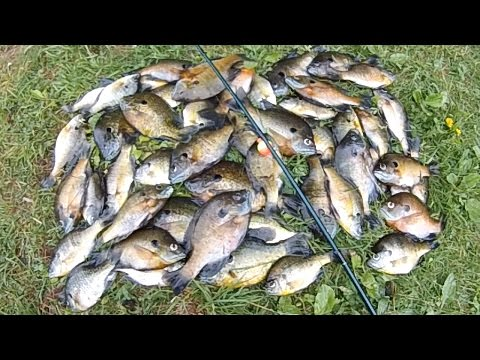 Bait Fishing #126 – Fast Bluegill Bobber Fishing with Worms