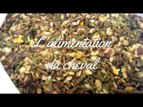Conseil - L'ALIMENTATION DU CHEVAL 🌾