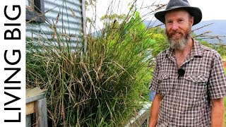 Simple Permaculture-Based Grey-Water Treatment System - Video Youtube