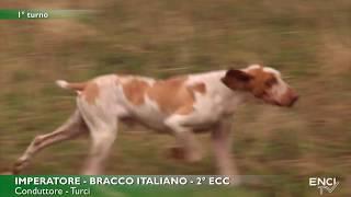 MONDIALE BRACCO ITALIANO seconda parte