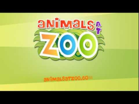 Video of Animals at Zoo
