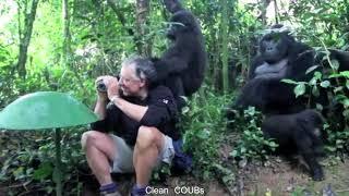 Прикольные видео | COUBs funny videos #21