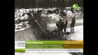 Тундровый экстрим. Московские видеоблогеры ознакомились с северной экзотикой