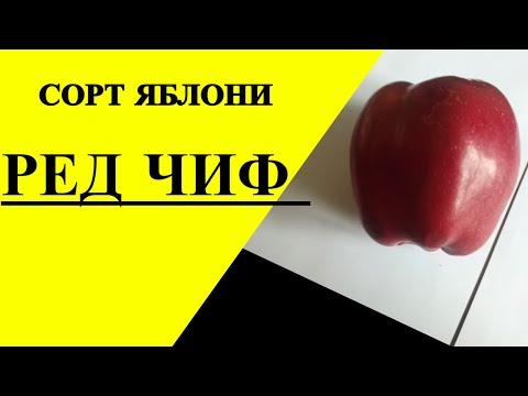 Ирина лаврентьева талисман любви fb2