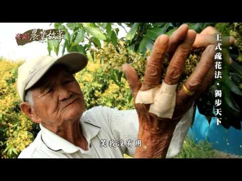 農業故事館-荔枝