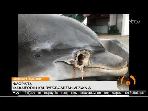 Φλόριντα | Πυροβόλισαν εξ επαφής δελφίνι! | 13/02/2020 | ΕΡΤ