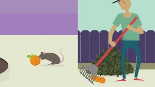 """""""How to get rid of Rats and Mice without Poison"""" - Nature Neighbors PSA"""