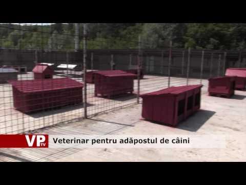 Veterinar pentru adăpostul de câini