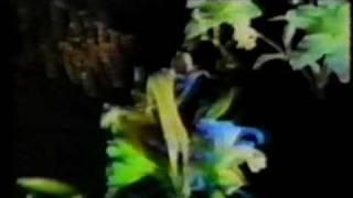 ABBA DREAMWORLD (FIRST KNOWN VIDEO)