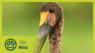 Bushveld Birds - Africa's Wild Wonders - The Secrets of Nature