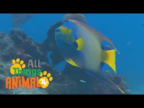 FISH |  Animals for children. Kids videos. Kindergarten | Preschool learning