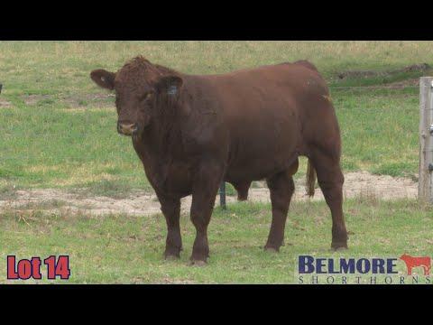 BELMORE QUANTUM Q283