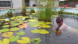 SWIMMING In My Backyard POND! With HUGE BASS And Baby Fish That Just Hatched Out!!!