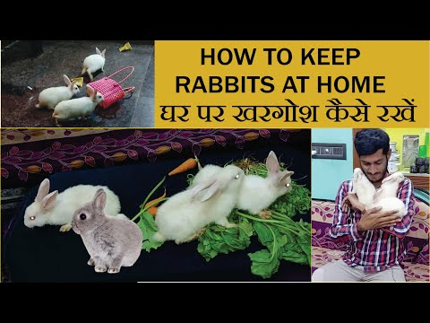 , title : 'How to care rabbits at home in Hindi - Daily Routine & Diet update