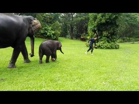 Baby Elephant Loves Sliding on Wet Grass