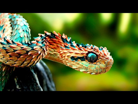 Amazing Animals With Unusual Superpowers - Wildlife Documentary HD