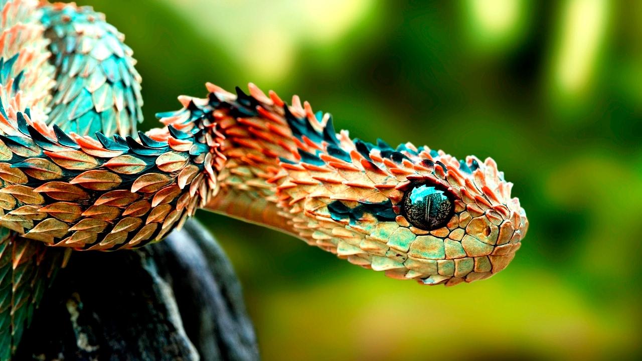 Amazing Animals With Unusual Superpowers – Wildlife Documentary HD