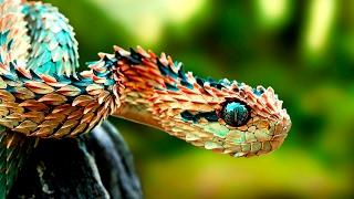 Amazing Animals With Unusual Superpowers - Wildlife Documentary HD