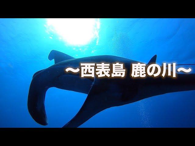 石垣島ダイビング|西表島鹿の川へ行ってきました!|ビーチライフ石垣島