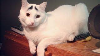 Смотреть онлайн Подборка с приколами про котов