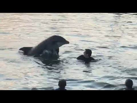 Dolphin Swims and Plays With Children in Harbour