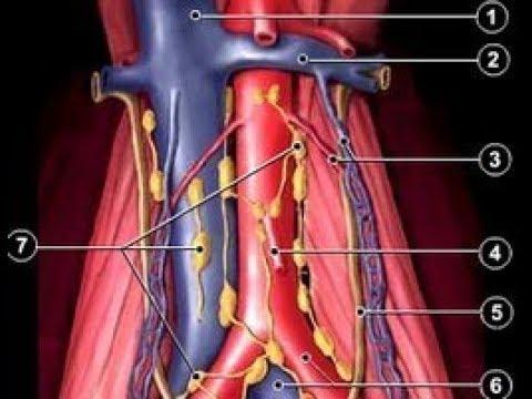 Laparoskopowa biopsja węzłów chłonnych okołoaortalnych
