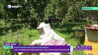 AFAQ layihəsi çərçivəsində qadın fermerlərə dəstək göstərilir