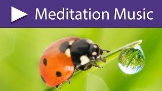 Zen Lotus Garden Meditation Music: 8 HOURS Relaxing Songs and Calm Nature Sounds