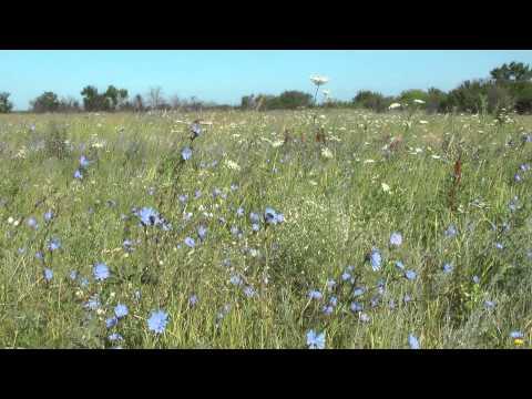 Don steppe, flowers .. Донская степь, цветы
