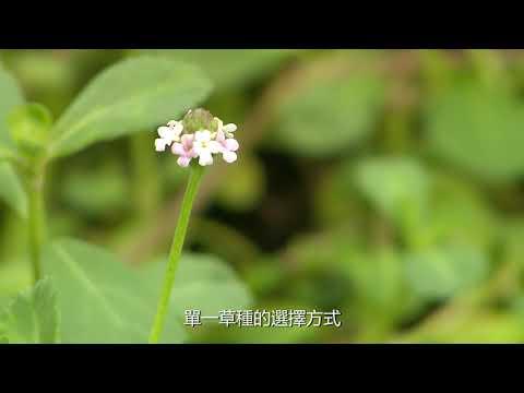 農業改革看台灣 草生栽培