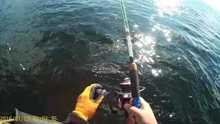 Рыбалка палтус магадан