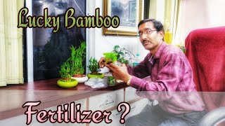 How to FERTILIZE your LUCKY BAMBOO Plants ?