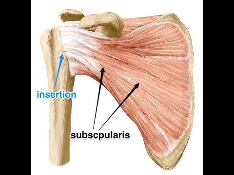 Esercizi per il tratto indietro nel osteocondrosi