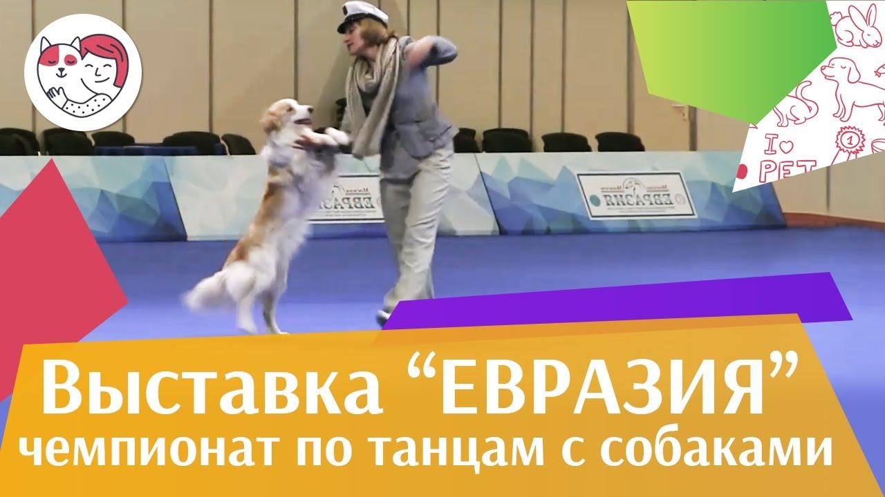 Чемпионат РКФ по танцам с собаками 6 на Евразии 17 ilikepet