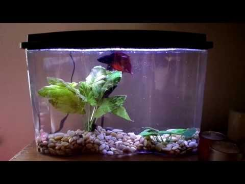 Aquarius bettawave 2 5 gallon aquarium kit with led for How much are fish at walmart