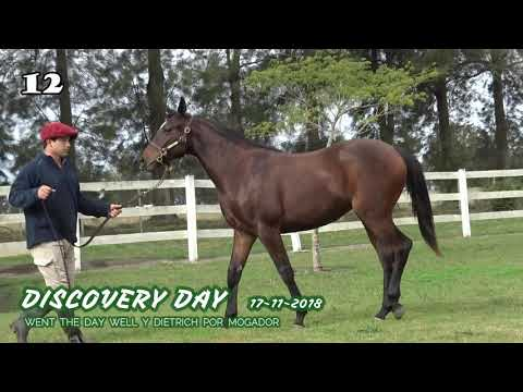 Lote DISCOVERY DAY