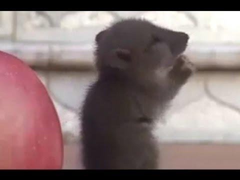 [ CHUYỆN LẠ ] - Chú chuột nhắt lạy phật ở Việt Nam