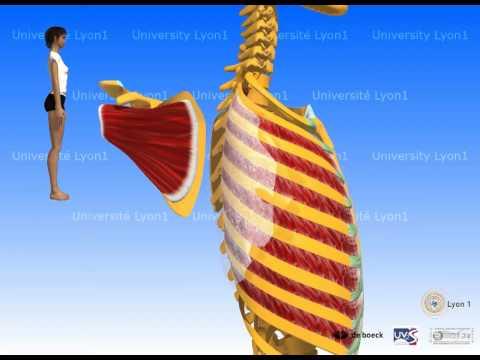 Physiothérapie de traitement de lhypertension