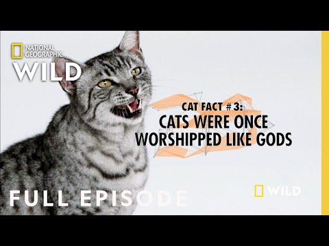 Elephants, Cats & Octopuses (Full Episode) | Everything You Didn't Know About Animals