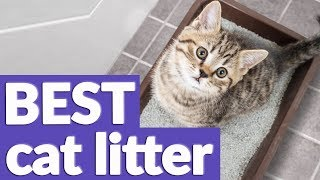 Best Cat Litter in 2019 | 10 TOP RATED Cat Litters