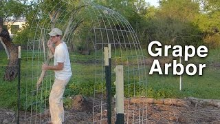 Building the Grape Arbor Trellis - Cattle Panels and T-posts
