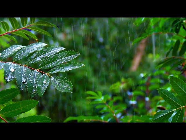 Rainforest Rain Sounds for Sleeping or Studying 🌧️ White Noise Rainstorm 10 Hours