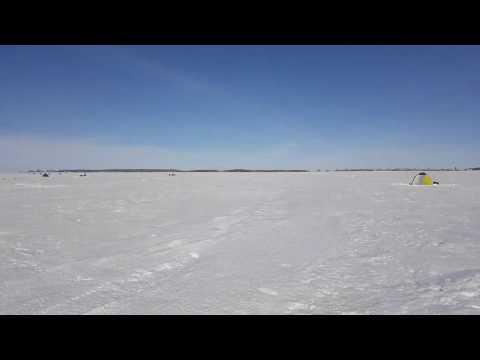 Карась.подледный лов. Озеро Яровое Курганская область 9.03.2019года