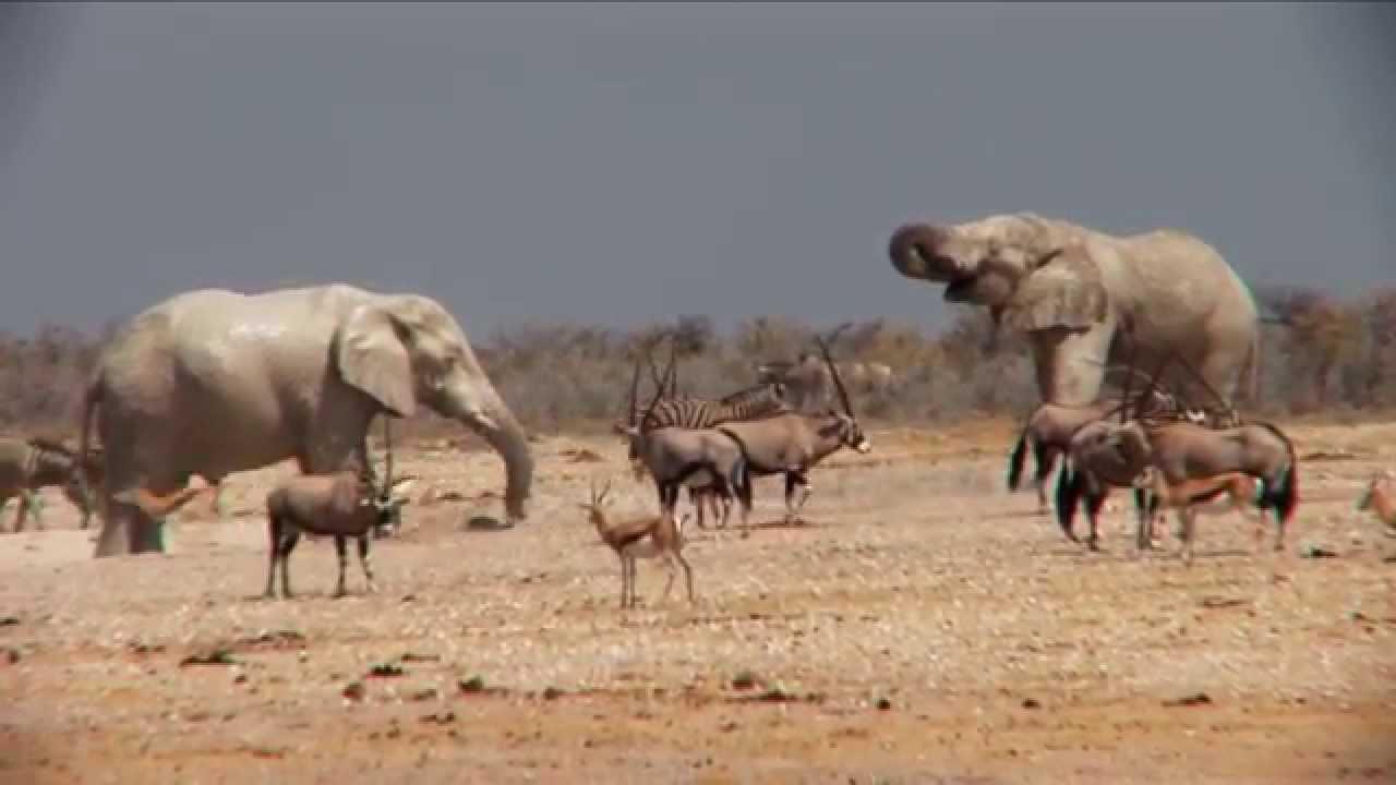 Namibia: Etosha Nationalpark (1:07)
